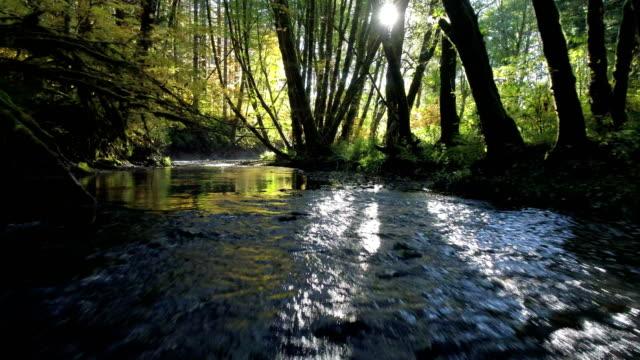 natural stream in a forest: pacific northwest - ручей стоковые видео и кадры b-roll