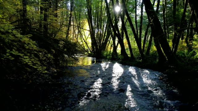 natural stream in a forest: pacific northwest - река стоковые видео и кадры b-roll
