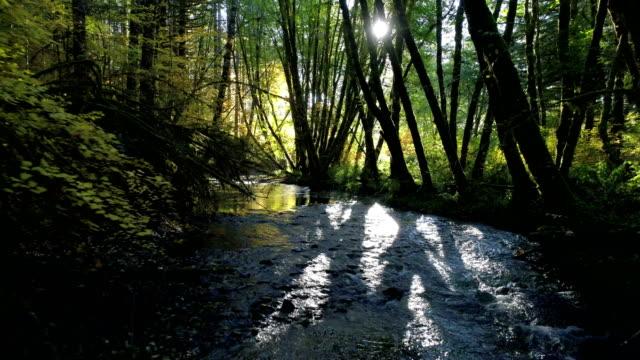 森林中的自然溪流: 西北太平洋 - 溪 個影片檔及 b 捲影像