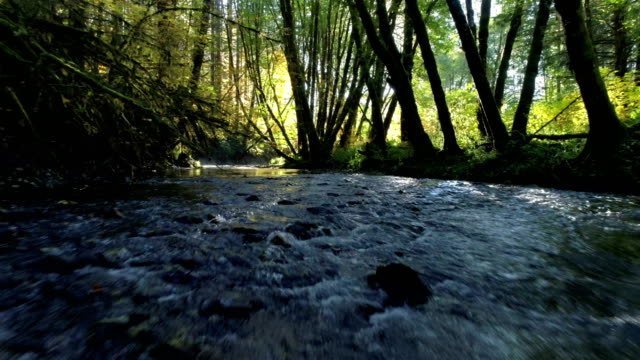 Natural Stream in a forest: Pacific Northwest
