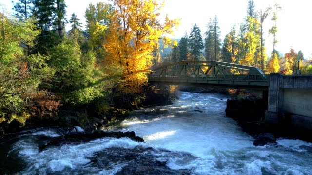 natural stream in a forest: white water rapids: pacific northwest - albero caduto video stock e b–roll