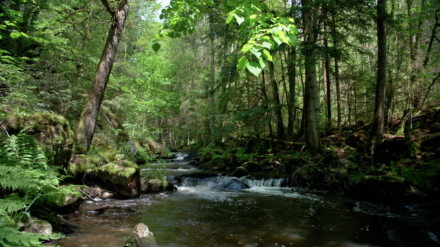 Natürlicher Bach im Frühlingswald – Video