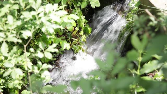 森で天然水をソース - 湧水点の映像素材/bロール