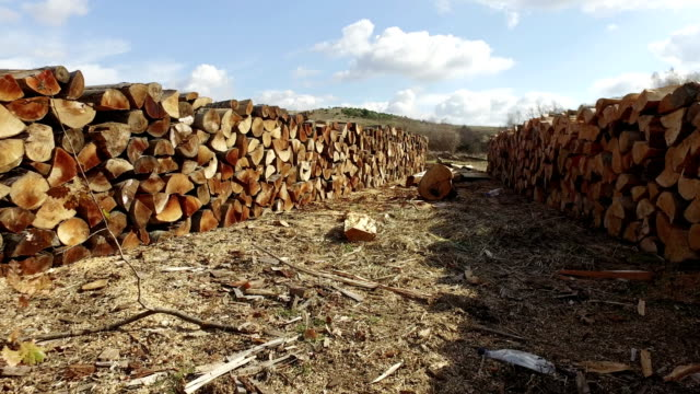 vídeos de stock e filmes b-roll de natural wooden background - closeup of chopped firewood. firewood stacked and prepared for winter pile of wood logs - material de construção