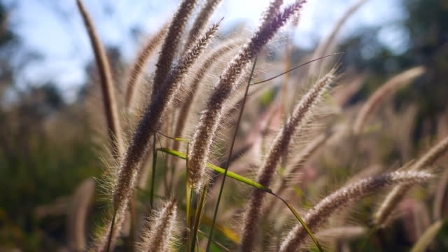 自然と風、風に対する草の花 ビデオ