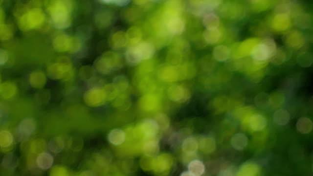 natur bakgrund suddig abstrakt. - förgrundsfokus bildbanksvideor och videomaterial från bakom kulisserna