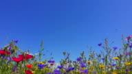istock Nature background,  British summer wildflowers on coast of Wales 1263186185