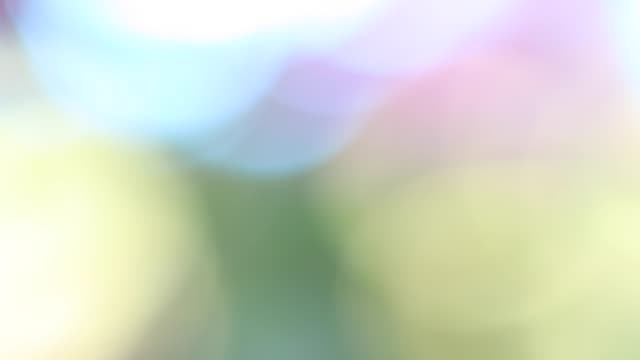 Nature Background With Beautiful Colorful Bokeh Circles