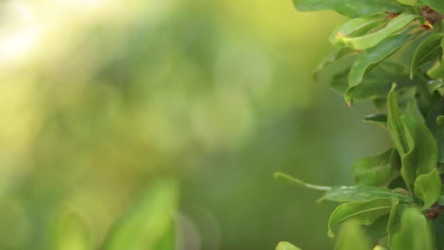 Nature Background With Beautiful Green Bokeh Circles
