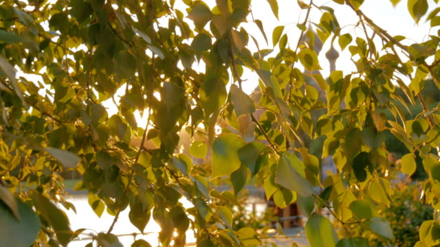 Nature background with foliage and sun lens flares at sunset video
