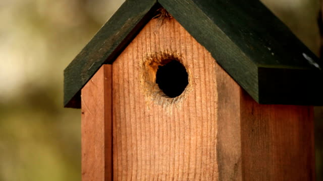 HD Nature Birdhouse and bird video