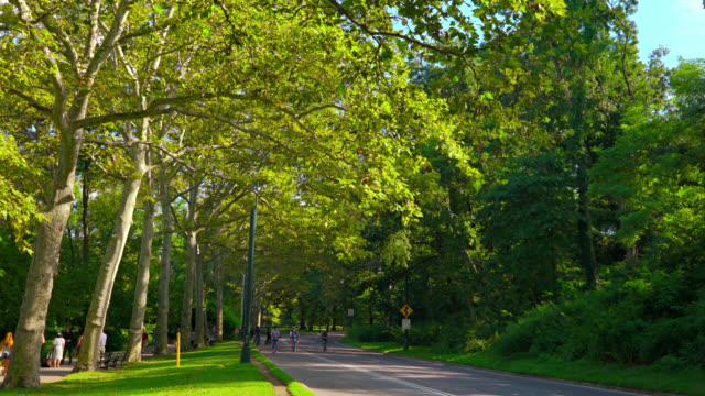 Nature, Central park, New York, USA video