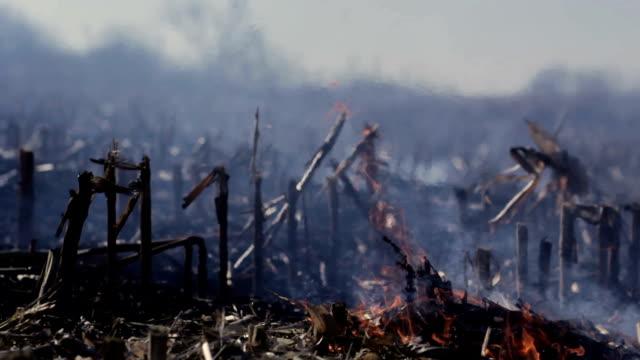 nature damage ecological environmental destruction - сила природы стоковые видео и кадры b-roll