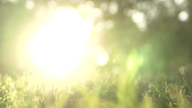 Nature defocused video