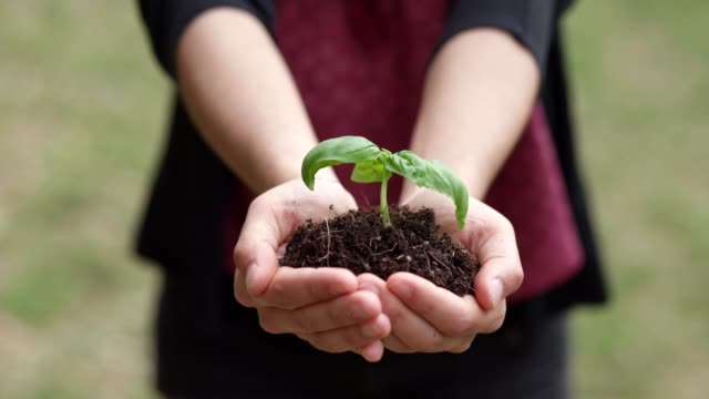 vídeos de stock e filmes b-roll de nature, growth, prosperity-woman's hands holding seedling - moralidade