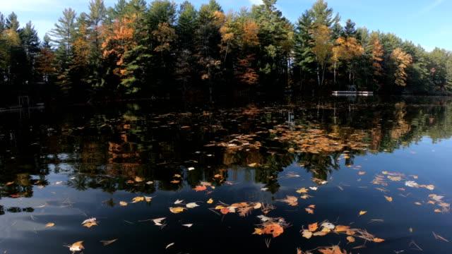 nature in autumn - video
