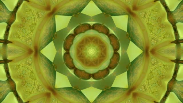 Nature kaleidoscope pattern video