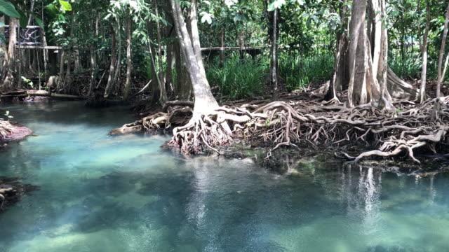 Natureza paisagem Pa Phru Tha Pom Khlong canção Nam Karbi, Tailândia - vídeo