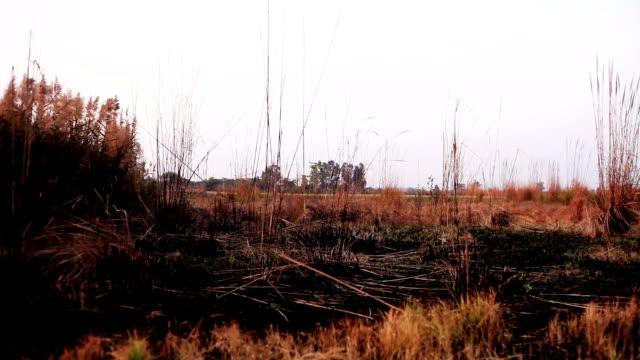 自然の風景 - ハリヤナ州点の映像素材/bロール