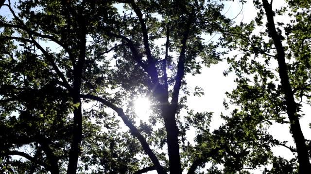 vídeos y material grabado en eventos de stock de fondo de hoja de naturaleza con la luz del sol - memorial day