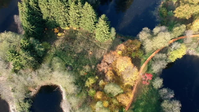 nature park autumn landscape with lake and trees, aerial - lituania video stock e b–roll