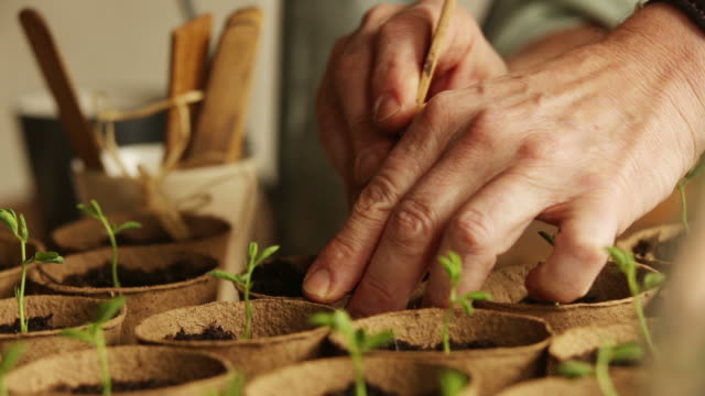 Nature, planting seedling b           NA Close up dolly shot of a man's hand planting out seedlings in a gardener's environment. flower pot stock videos & royalty-free footage