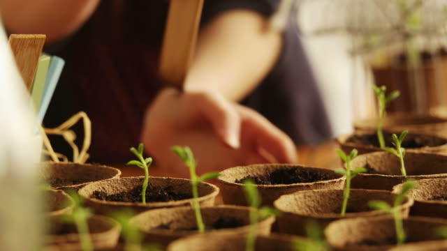 Nature, planting seedling           NA video