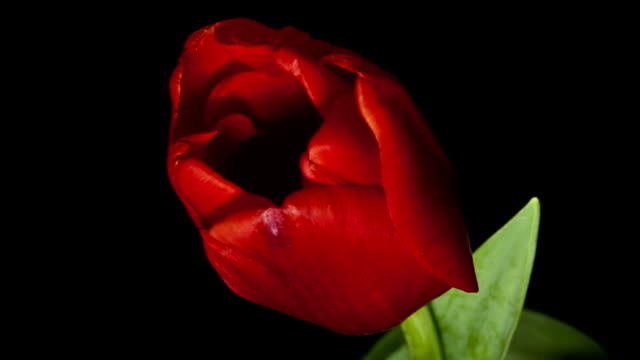 stockvideo's en b-roll-footage met natuur rode bloem - fresh start yellow