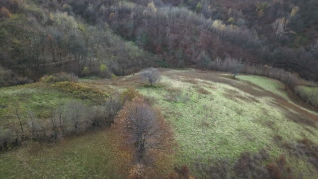 natura vista dall'alto - albero spoglio video stock e b–roll