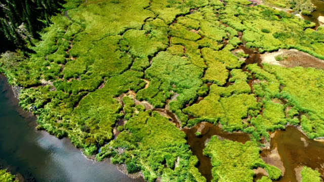 vídeos de stock, filmes e b-roll de fluxos de natureza como videiras - condado de pitkin