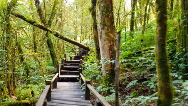 自然研究。チェンマイで一番高い滝を旅するタイの土井インタで梅雨の季節 ビデオ