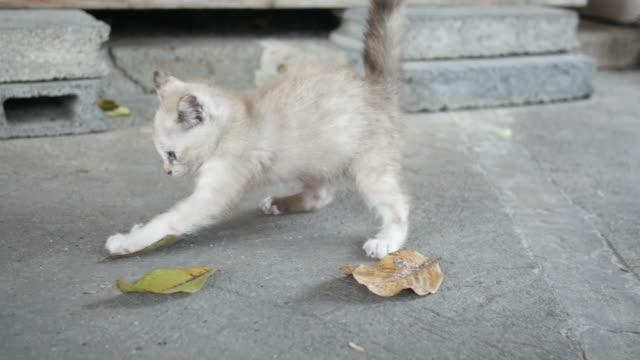 naughty kitten , jumping - kociak filmów i materiałów b-roll