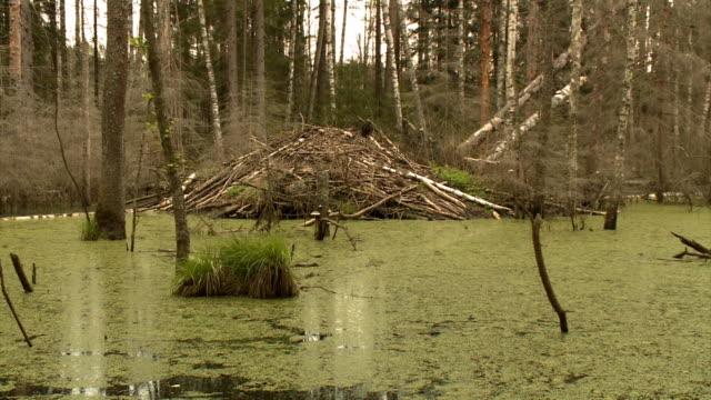 Près de la maison castor - Vidéo