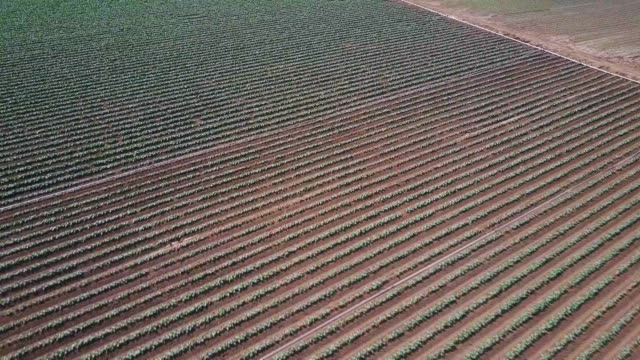 Neat Rows of Crops Near Salinas, CA - Aerial Shot video