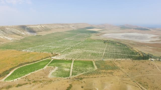 vídeos de stock e filmes b-roll de aerial: neat rows of green vineyards - multicóptero