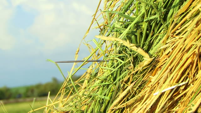 Needle in a Haystack video