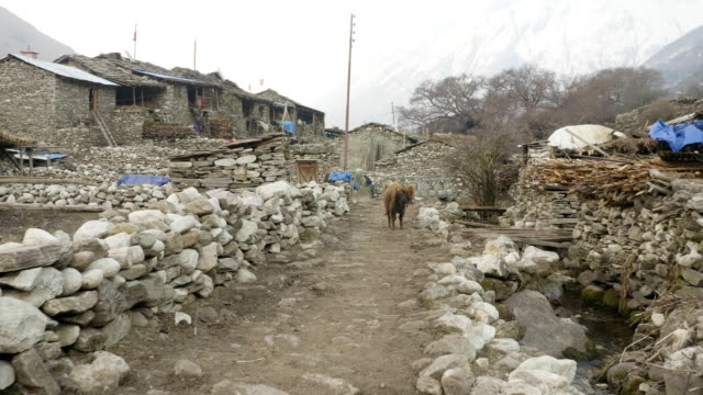 vídeos y material grabado en eventos de stock de aldea nepalí sama gaon entre las montañas. manaslu circuito trek la zona. - aldea