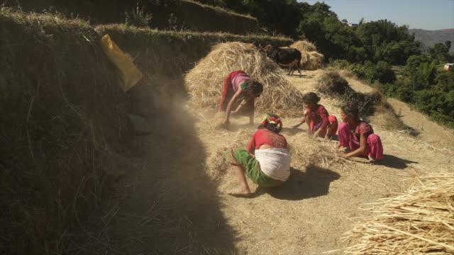 ネパールの女性と女の子は、干し草の山にハンドを使用してください。 - ネパール点の映像素材/bロール
