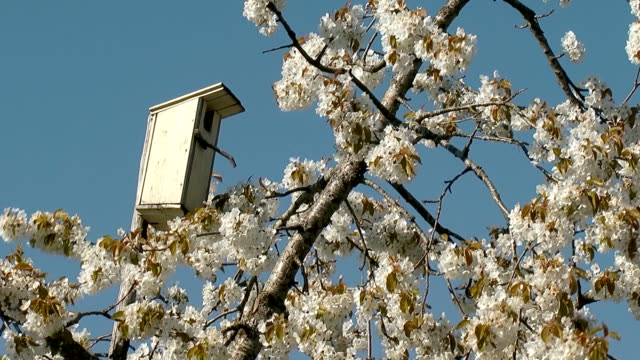 nest box on blossom apple tree video