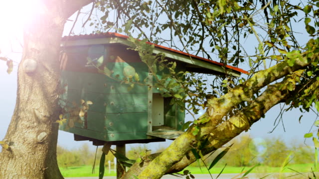 Nesting box on a tree video