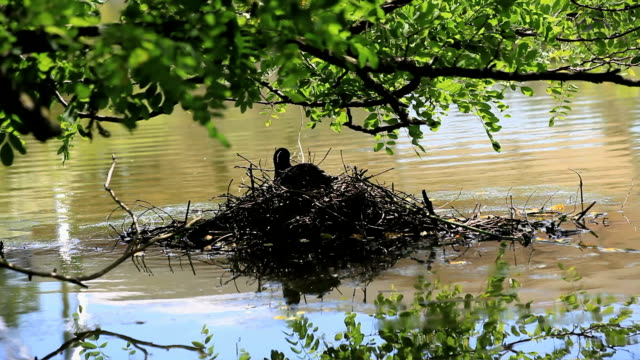 Nesting video