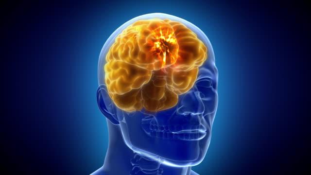 neuronale gehirn aktivität animation hd. - menschlicher kopf stock-videos und b-roll-filmmaterial