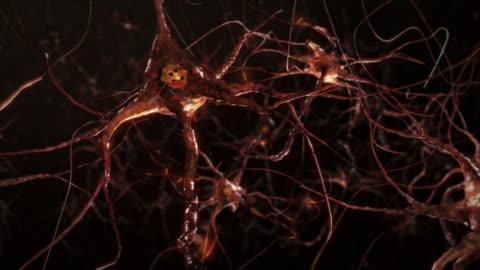 vídeos y material grabado en eventos de stock de células neurona sinapsis. colores cálidos. conexiones de red. cerebro. - parte del cuerpo humano