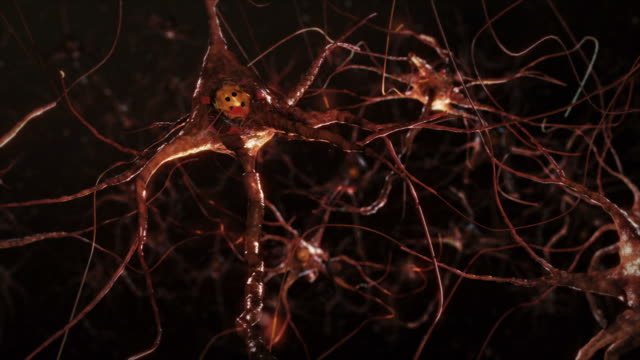 Neuron cells, synapse. Warm colors. Network connections. Brain. video