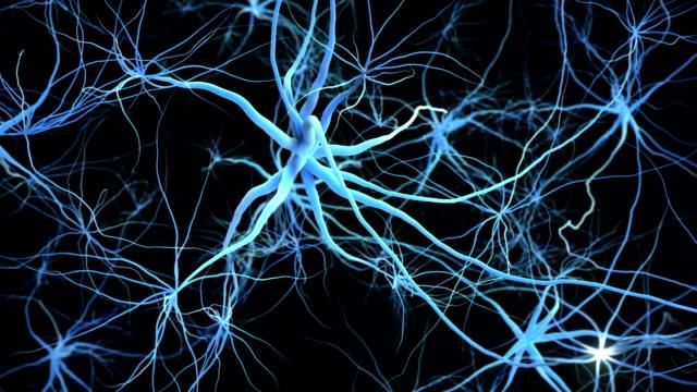 Neuron network. video
