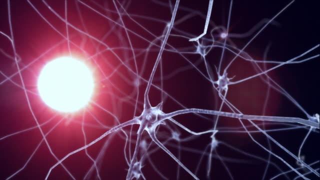 neurons - biyomedikal animasyonu stok videoları ve detay görüntü çekimi