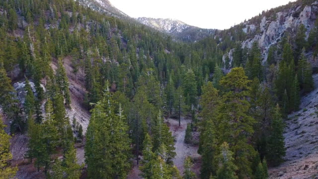 nevada spring mountains forest mt charleston aerial - nevada video stock e b–roll