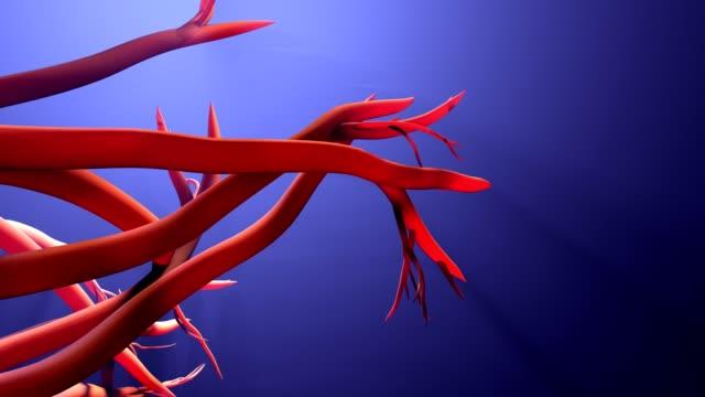 vídeos de stock e filmes b-roll de new blood vessel formation - capilar vaso sanguíneo