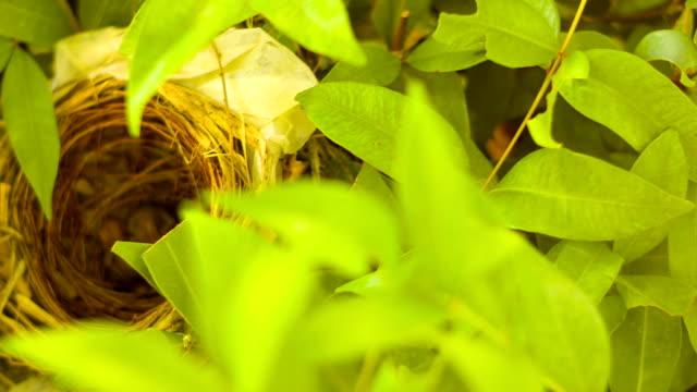 new born baby birds on the nest video