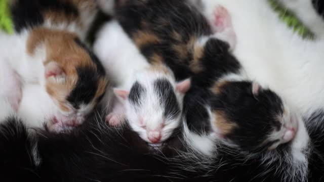 vídeos y material grabado en eventos de stock de los gatitos recién nacidos tienen hambre de leche de madres - animal joven